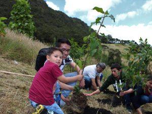 Plantación y siembra de árboles para colegios